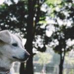 犬の食糞が再発!認知症や病気の可能性を解説!