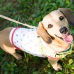 犬の食糞対策にビオワンファインは効果ある?