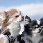 犬がウンチを食べるのは、消化酵素の不足が原因!