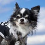 犬 食糞の年齢はいつまで、何歳までが正常?
